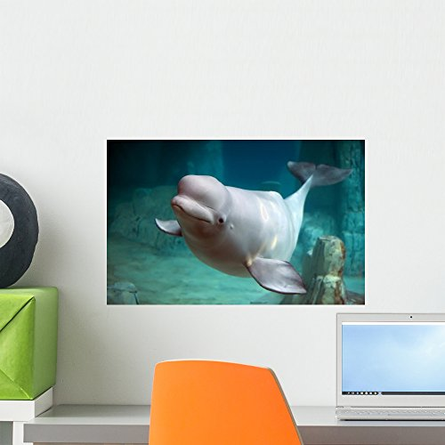 Mural Whale (Wallmonkeys Beluga Whale Wall Mural Peel and Stick Graphic (18 in W x 12 in H) WM354378)