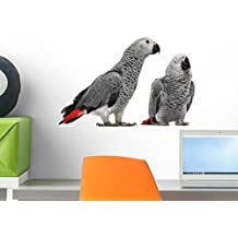 Wallmonkeys Two African Grey Parrot Wall Mural by Peel and Stick Graphic (18 in W x 11 in H) WM65893
