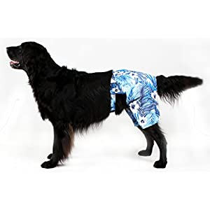 Blue Hawaiian Print Dog Board Shorts by Midlee (Medium)