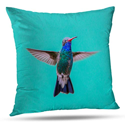 Feeder Gold Hummingbird (Geericy Decorative Throw Pillow Covers Bird More and with Birds Native Mexico Flowers Bloom Colorful Art Cushion Cover 18X18 Inch for Bedroom Sofa)