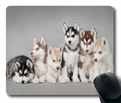 Amazon Com Wskshop Husky Mouse Pad New Design Cute Siberian Husky