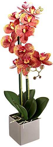 Real Touch Phalaenopsis Orchid 24