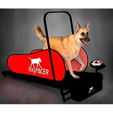 cheap DogPacer LF 1 2020