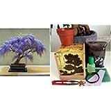 Wisteria Bonsai Growing Kit - Soil/Pots/Seeds2x/Wire/Fertilzer/Mesh/Tweezer/PlantMarkers