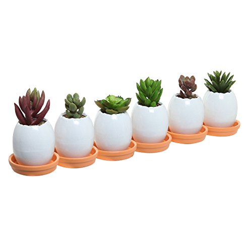 - Set of 6 Mini White Egg Shell Shaped Decorative Ceramic Succulent Plant Pots w/ Orange Saucers - MyGift