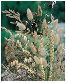 Herbes pour bouquets s/éch/és m/élanger les graines