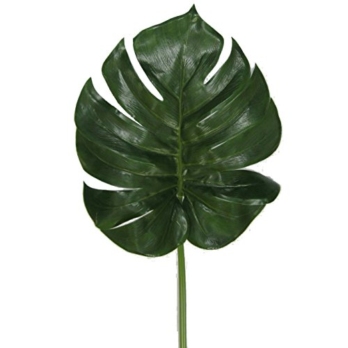NORBEN IMPORT CORPORATION Monstera Palm ()
