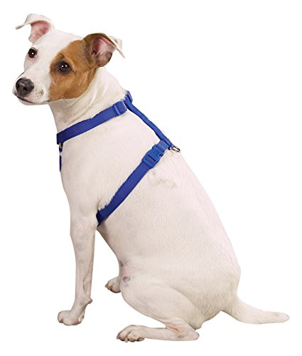"""Zack & Zoey 1"""" Nylon Dog Harness with Nickel-Plated D-ring a"""