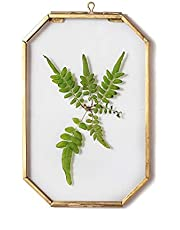 NCYP Wall Hanging 4X6 inches Long Octagon Herbarium Brass Glass Frame for Pressed Flowers, Dried Flowers, Poster, Double Glass, Floating Frame Style, Glass Frame only