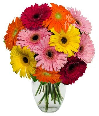 From You Flowers - Stunning Gerbera Daisies - 10 Stems (Free Vase Included)