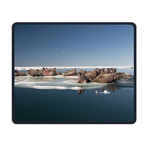 Walrus Hauled Out On Pack Ice To Rest And Sunbathe Office,game Necessary,good Partner Mouse,18x22cm Mouse Pad