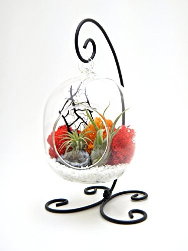 Bliss Gardens Small Air Plant Terrarium Kit // Sunburst On Ice // 6