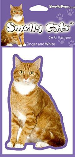 Amazon.es: Jengibre y blanco gato los amantes de los regalo - 2 x. Ideal ambientadores para el coche