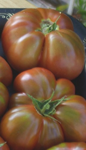 50-paul-robeson-tomato-seeds-organically-grown-by-ohio-heirloom-seeds