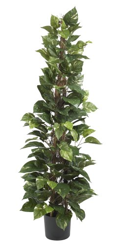 Nearly Natural 6613 Pothos Climbing Decorative Silk Plant, 63-Inch, Green by Nearly Natural