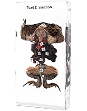 Dissection of a Toad Specimen Animal Specimen in Acrylic Block Paperweights Resin Collection Display Creatures Science Education Classroom Specimens