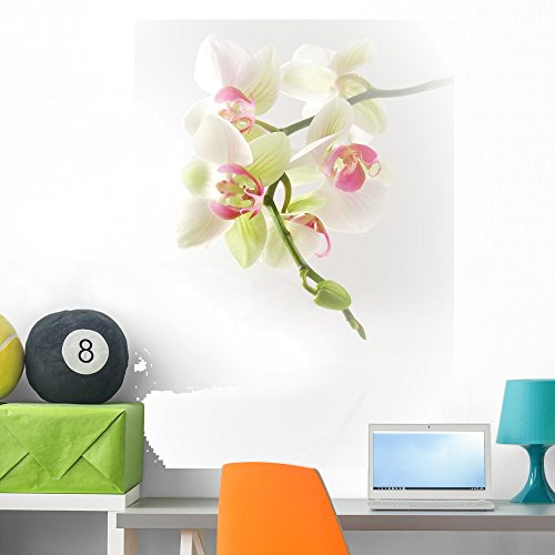 Orchida Es Wall Mural by Wallmonkeys Peel and Stick