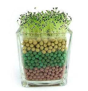 50 semillas / Semillas de hierbas del corazón de escritorio paquete de mini bonsai Semillas de hierba en forma de oír,