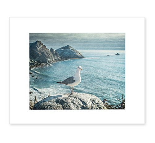 Northern California Big Sur Landscape Wall Art, Coastal Seascape Decor, Wild Bird Seagull Picture, 8x10 Matted Photography Print, 'Lobster Mornay For Tea'