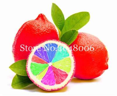 - 50 pcs Edible Fruit Meyer Lemon Seeds Plants Exotic Colorful Citrus Limon Tree Fresh Fruit Vegetable Plants high Survival Rate: m