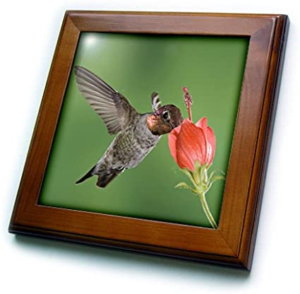 Osprey on Nest Framed Tile 8 by 8 3dRose ft/_207950/_1 USA Edgewater Florida