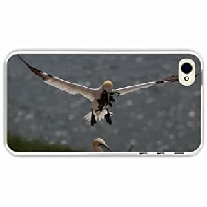 iPhone 4 4S Black Hardshell Case gull nest algae Transparent Desin Images Protector Back Cover