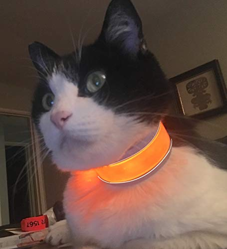(Light-up Cat Collar Breakaway Made for Cats Night Safety Glow or Blink. No weighty Buckle or Metal Ring.)