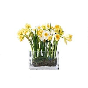 MARJON FlowersArtificial Yellow White Narcissus Daffodil Flower Arrangement Vase Centrepiece Plant Realistic 39