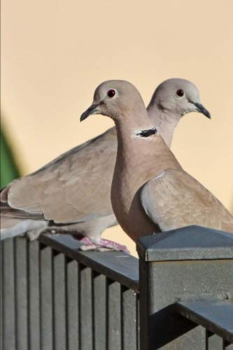 Eurasian Collared Dove (Streptopelia Decaocto) Journal: 150 page lined notebook/diary