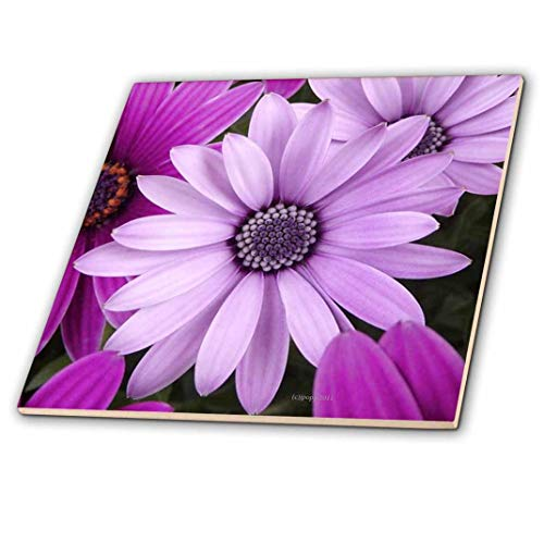 3dRose 3D Rose Shades of Purple - Ceramic Tile, 8-inch (ct_23813_3), 8