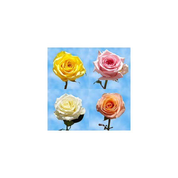 GlobalRose-Send-Flowers-On-Mothers-Day-75-Long-Stem-Assorted-Colors-Roses