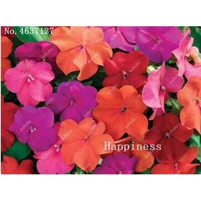 Kasuki Balsam Flower Bonsai Impatiens Balsamina Bonsai Flower, Toutch-Me-Not Flower for Home Garden Plants 100 Bonsai/Bag - (Color: 10): Garden & Outdoor