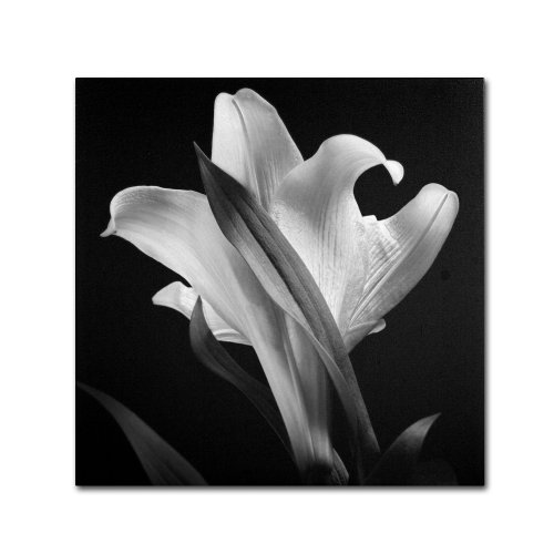 Lily by Michael Harrison, 35 by 35-Inch Canvas Wall Art