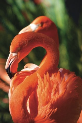 Flamingo Any Day Planner Notebook: Blank Scheduler Organizer Journal (Wildlife 150 Planner) (Volume 12) PDF