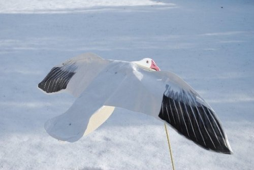 (Sillosocks Snow Goose Feeder Decoy (12-Pack), White)