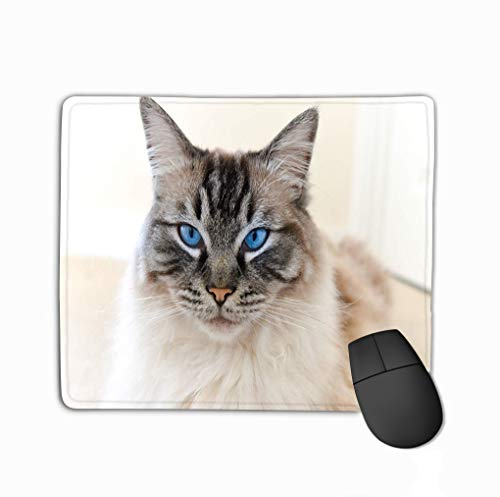 Mouse Pad Pedigree Ragdoll cat Portrait Seal Lynx Tabby Looking Camera Rectangle Rubber Mousepad 11.81 X 9.84 Inch ()