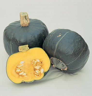David's Garden Seeds Squash Winter Buttercup D2416A (Orange Flesh) 50 Organic Seeds