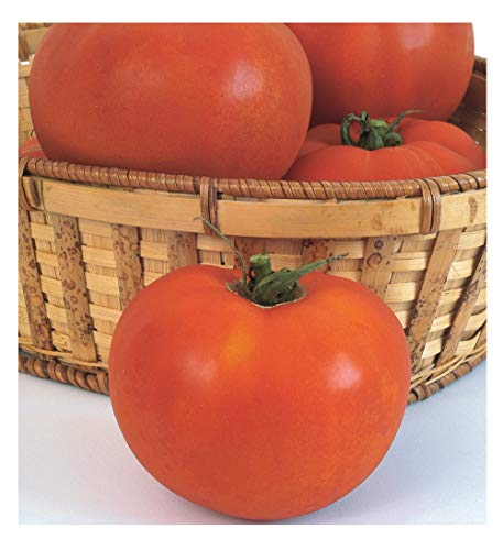David's Garden Seeds Tomato Beefsteak Celebrity ZA7332 (Red) 25 Non-GMO, Hybrid Seeds ()