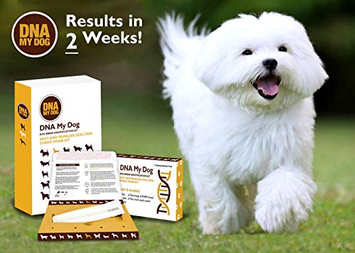Canine Genetic Age Test