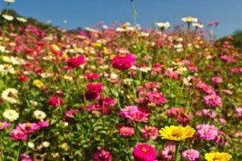 Nature's Seed Northwest Wildflower Blend, 500 sq. ft. (Best Grass Seed Mix For New England)