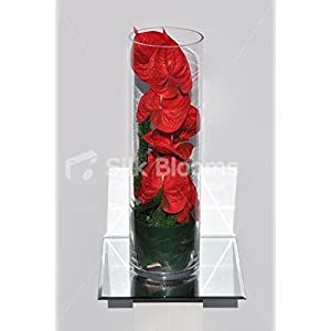 Fresh Touch Red Anthurium & Foliage Homewear Vase Arrangement 10