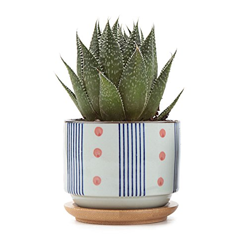 T4U 3 Inch Ceramic japanese Style Serial No.5 succulent Plant Pot/Cactus Plant Pot Flower Pot/Container/Planter - Pots Plant Painted
