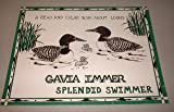 img - for A Read and Color Book About LOONS GAVIA IMMER SPLENDID SWIMMER book / textbook / text book