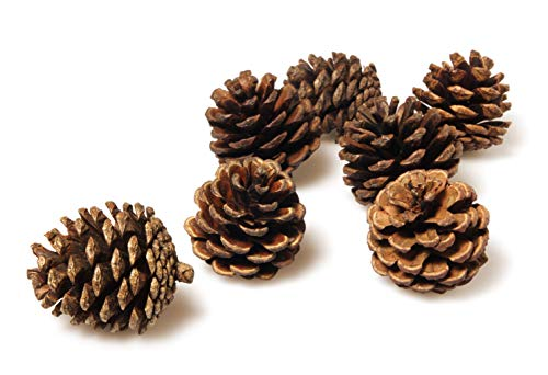 Pinecones Bulk - 50 Pine Cones in Bulk for Crafts, Natural, ()