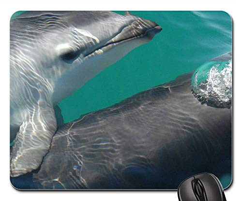 (Mouse Pad - Dusky Dolphin Sea Ocean Water Nature Outside)
