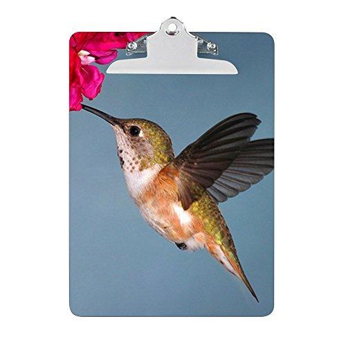 - Clipboard Female Rufous Hummingbird