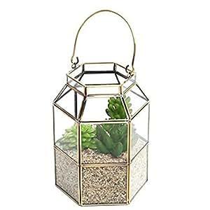 Mesa cristal plantas suculentas terrario caja w/asa superior–MyGift