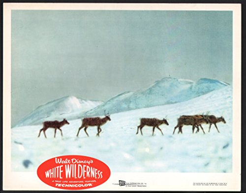 MOVIE POSTER: White Wilderness Lobby Card-Elk walking through snow.