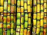 Tropical Importers Fresh Sugar Cane (15lb)