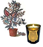 Pondichery Candle 9.5 oz by Cire Trudon